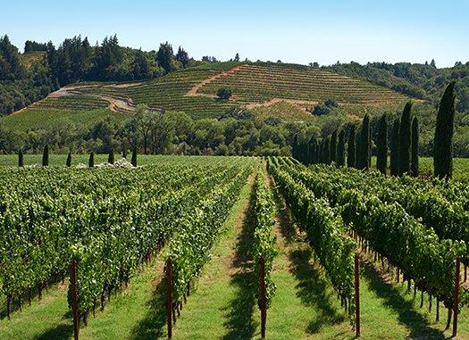 Wine Tour Farm